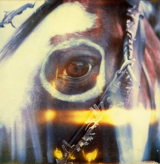 native-amercian-horse-2